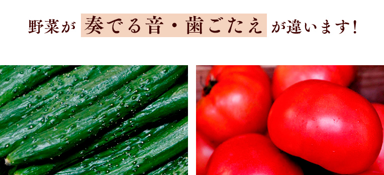 野菜が奏でる音・歯ごたえが違います!